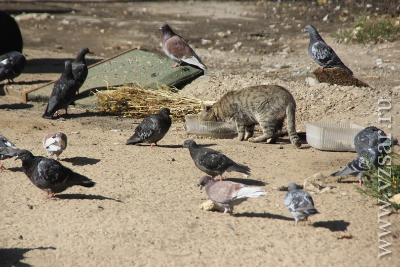 Валерию Радаеву показали мясных голубей ивручили каравай с девизом