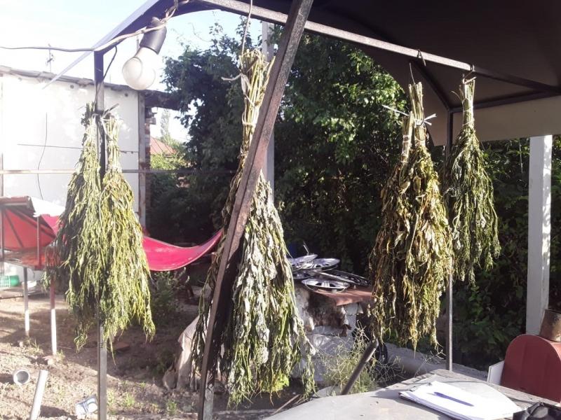 Муж выращивает дома коноплю в калифорний марихуана