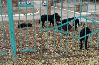 Саратовцы жалуются на беспризорных собак во дворе школы