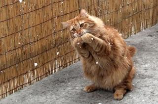 Саратовцев ждет пасмурный день с небольшим снегом
