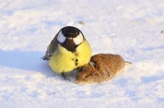 Саратовцев ждет очередной морозный день без снега