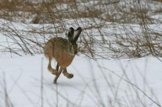 Саратовский охотник в погоне за зайцем ранил незнакомца в глаз