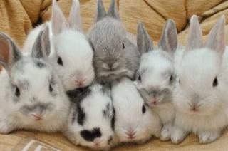 Мужчине грозит два года колонии за кражу семи кроликов