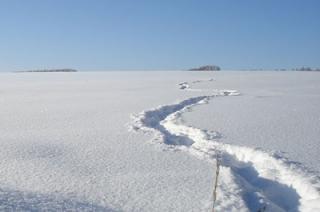 В поле под Саратовом насмерть замерзли два родных брата