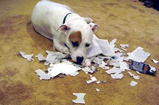 СУ СКР: следователь полиции уничтожил документы из уголовного дела