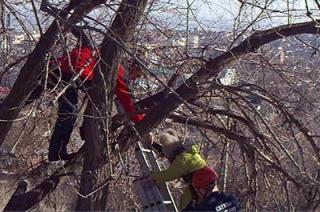 На Новоузенской спасатели помогли испугавшейся девочке слезть с дерева