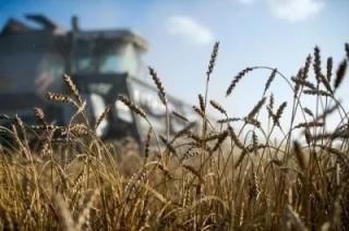 Экспорт российской пшеницы в Турцию вырос в четыре раза