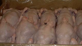 Птичий грипп. Ветеринары уничтожили в Энгельсе партию фарша