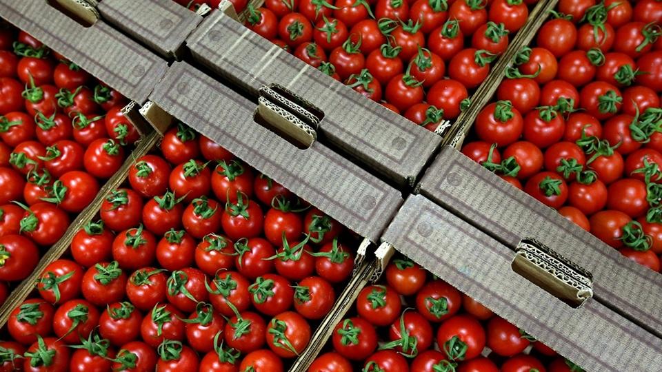 Наполигоне вЭнгельсе раздавили полторы тонны свежих овощей