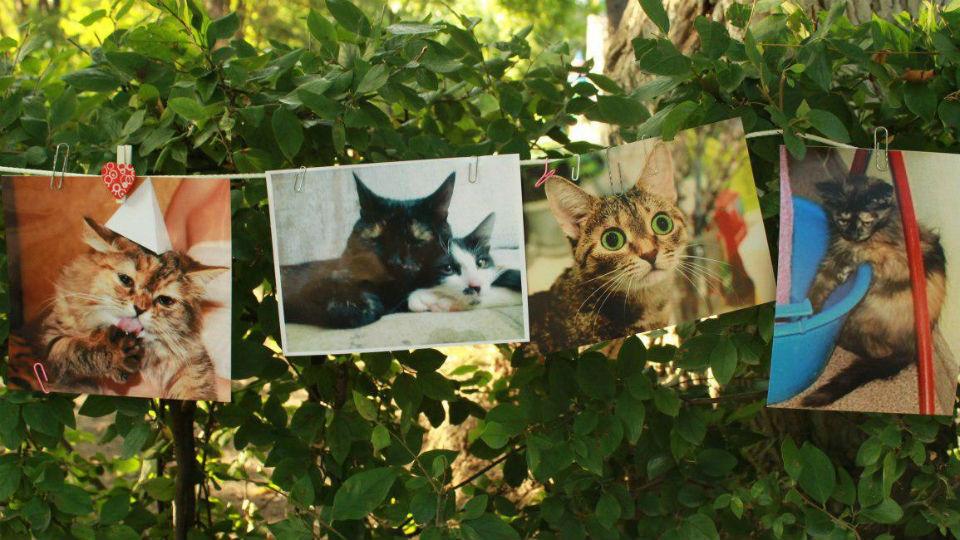 Картинки с днем фотографии 19 августа