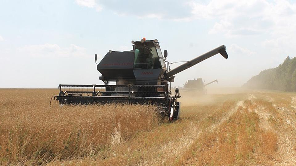 Урожай зерновых 2017 года может привести к изменению цен всторону снижения