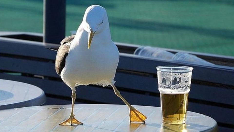 Представление «безалкогольное пиво» канет влету