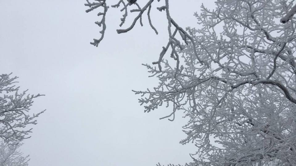 Погода в Саратовской области на сегодня - понедельник 04 января 2021 года